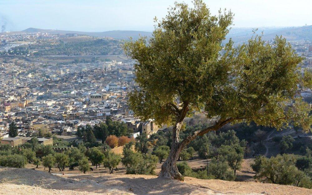 Olio del Marocco